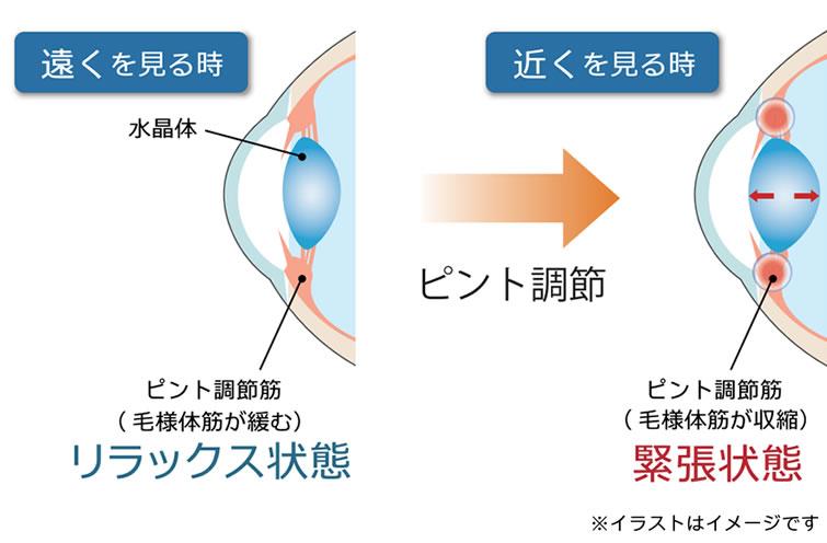 調節筋を使い続けると調節筋に過度の疲労が生じ、ピントがスムーズに合わなくなる。